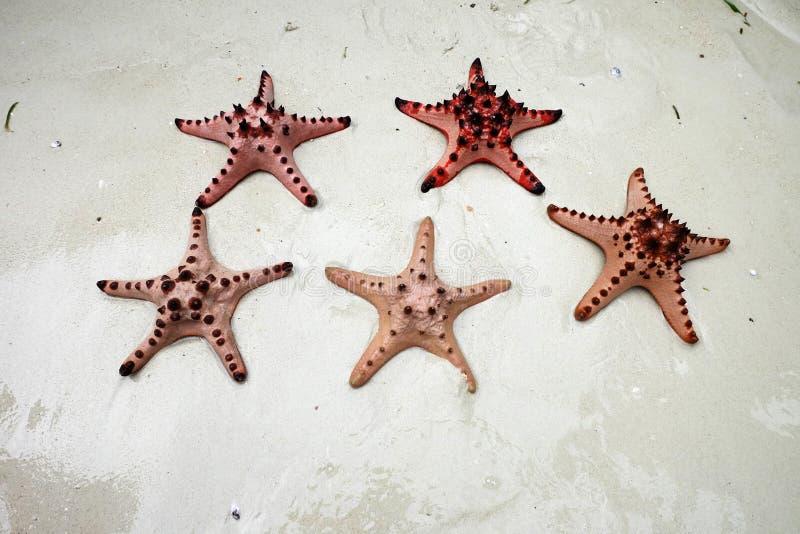 Sjöstjärnor på den vita sanden sätter på land under det ljusa solskenet arkivbild