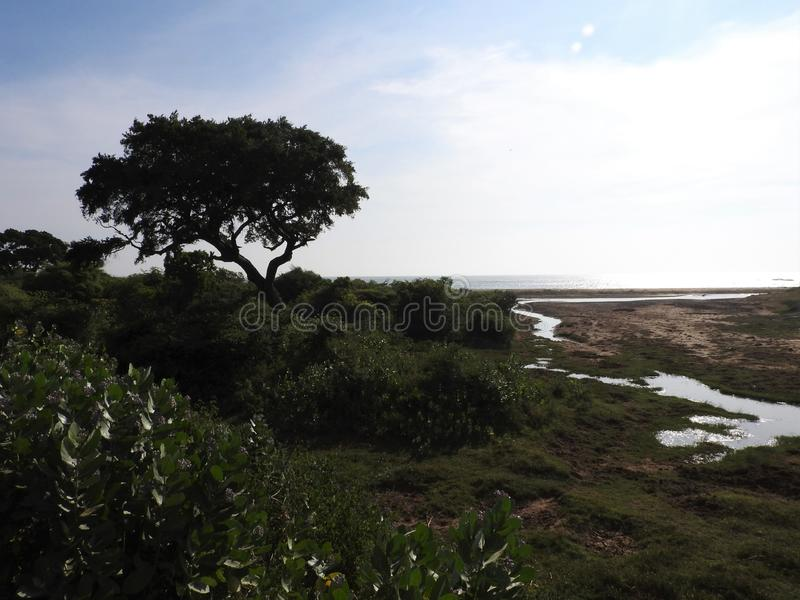 Sj?ar, f?glar, natur och landskap i den Yala nationalparken, Sri Lanka arkivbilder