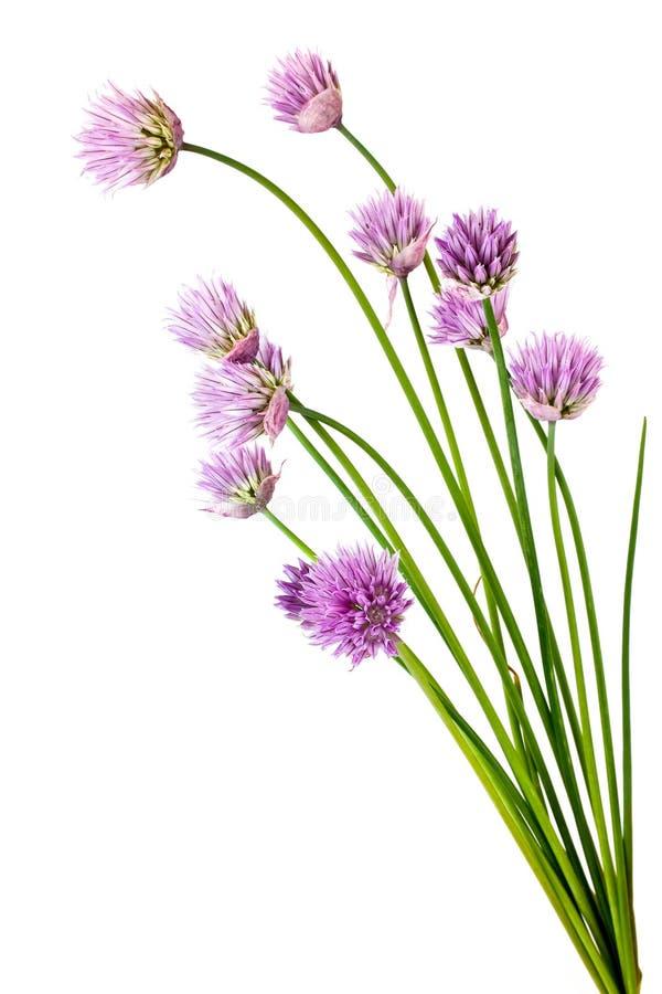 Sjalotbloemen royalty-vrije stock afbeelding