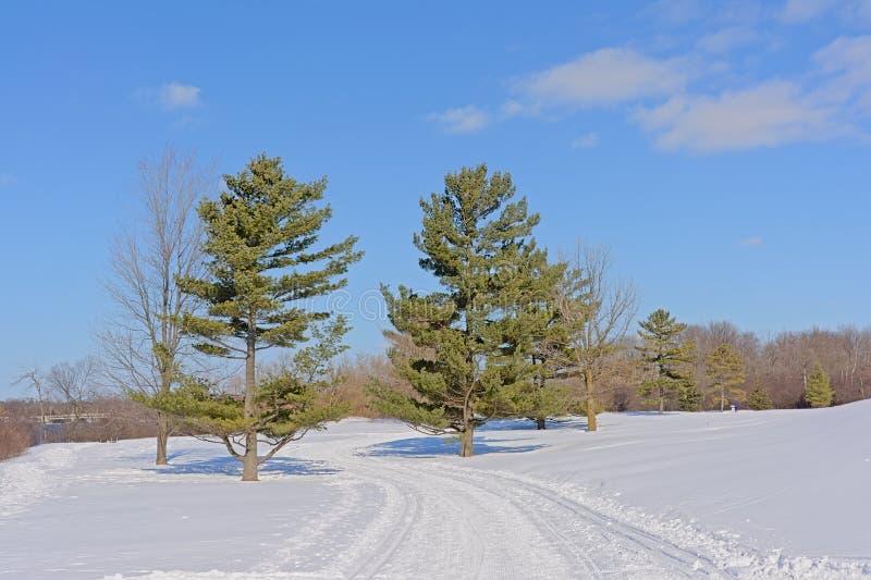 Sjam som fotvandrar och att korsa skiin för att släpa prydliga träd i snön på en solig vinterdag med blå himmel arkivbild