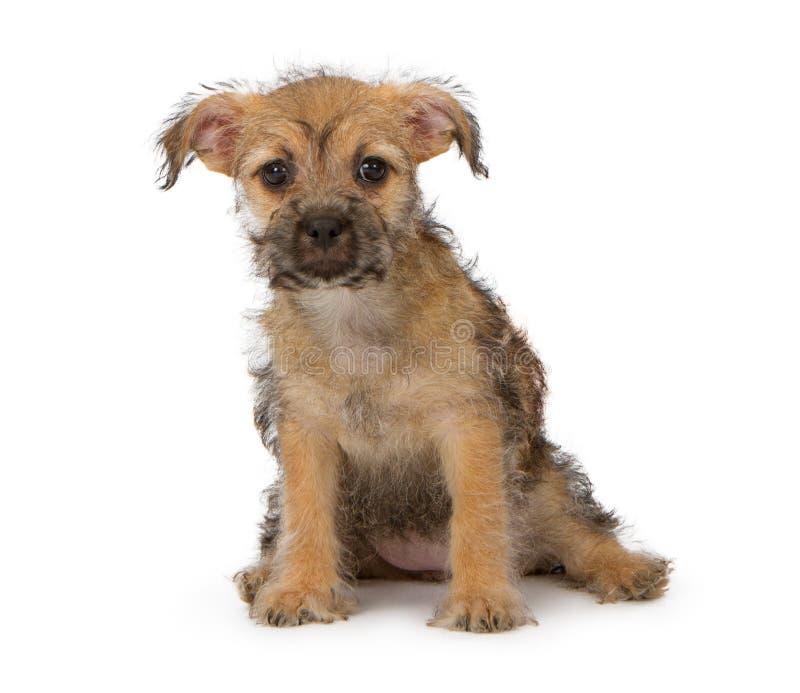 Sjofel Puppy stock foto's