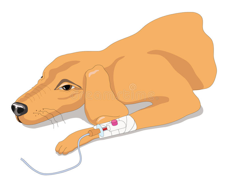 sjuk hund stock illustrationer