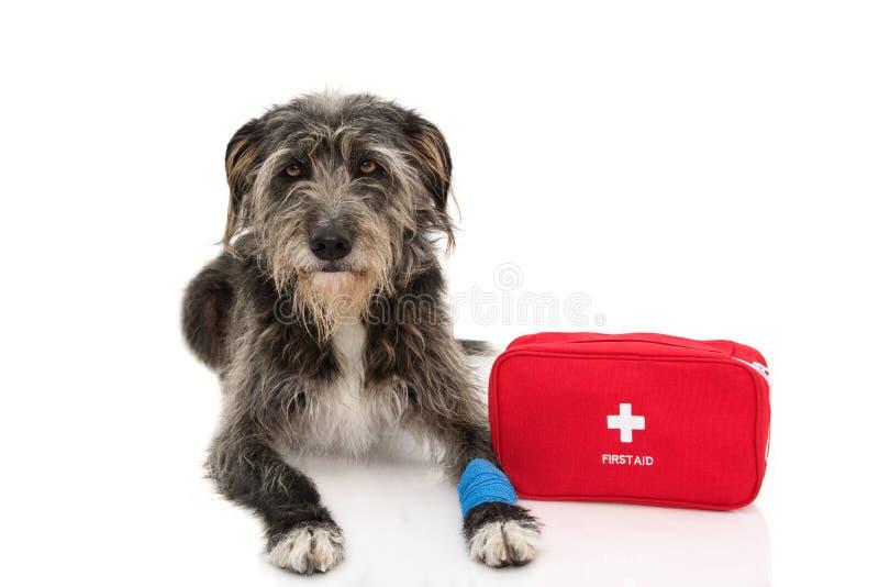 sjuk hund DEN SVARTA F arkivbild