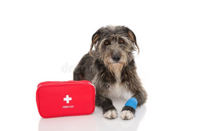 sjuk hund E Isolerat p? arkivbild