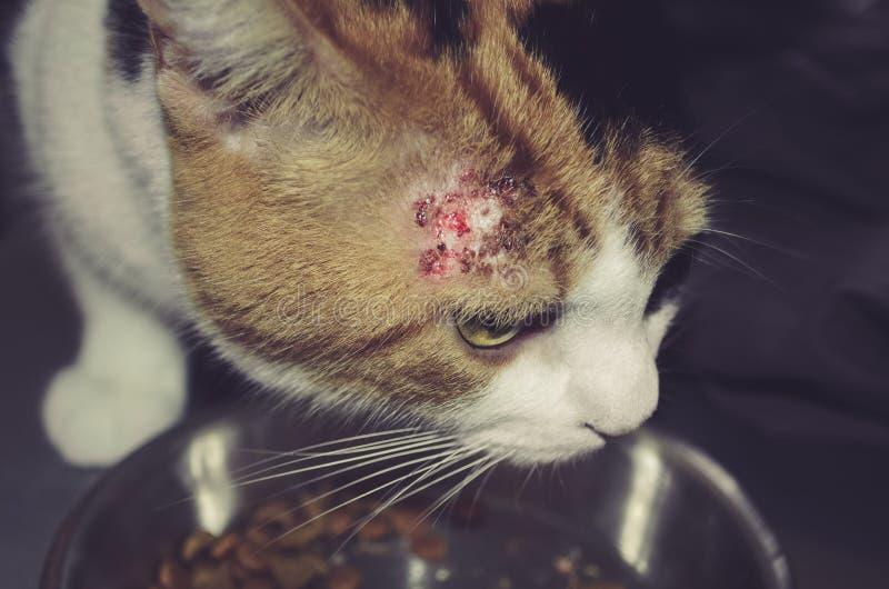 Sjuk katt med lappar arkivbild