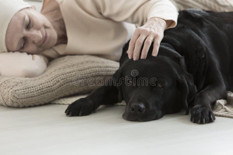 Sjuk kvinna som sover med hunden arkivfoto