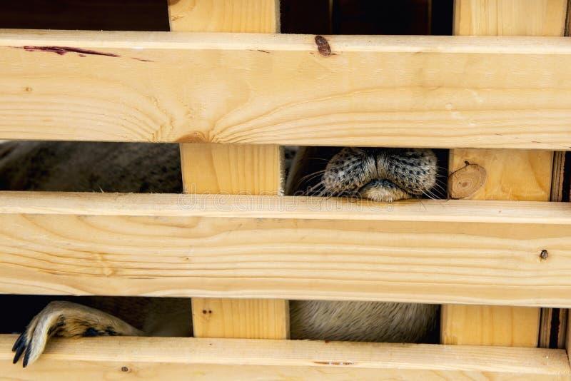 Sjuk skyddsremsa i trämått Ordna till för att släppa i natur arkivfoton