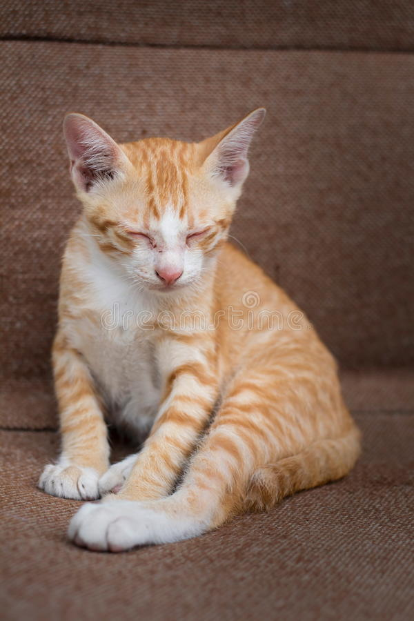 sjuka katter royaltyfria bilder
