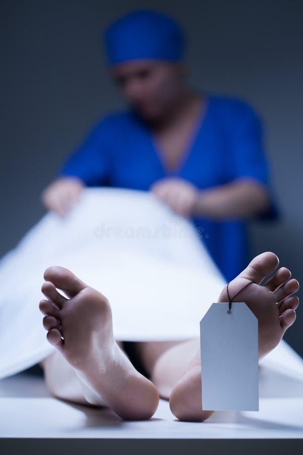 Sjuksköterska under att arbeta i bårhus fotografering för bildbyråer