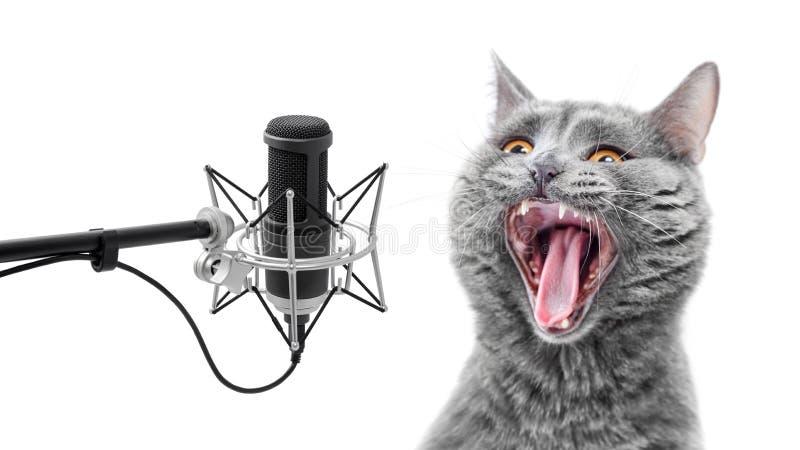 Sjunga mycket högt katten arkivfoton