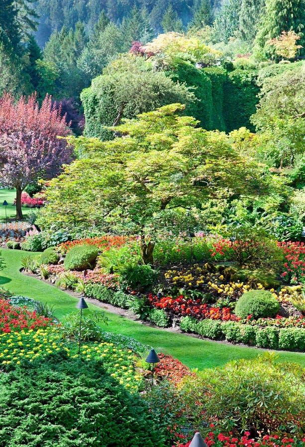 Sjunken trädgård på Butchart trädgårdar, centrala Saanich, brittiska Colu royaltyfria bilder