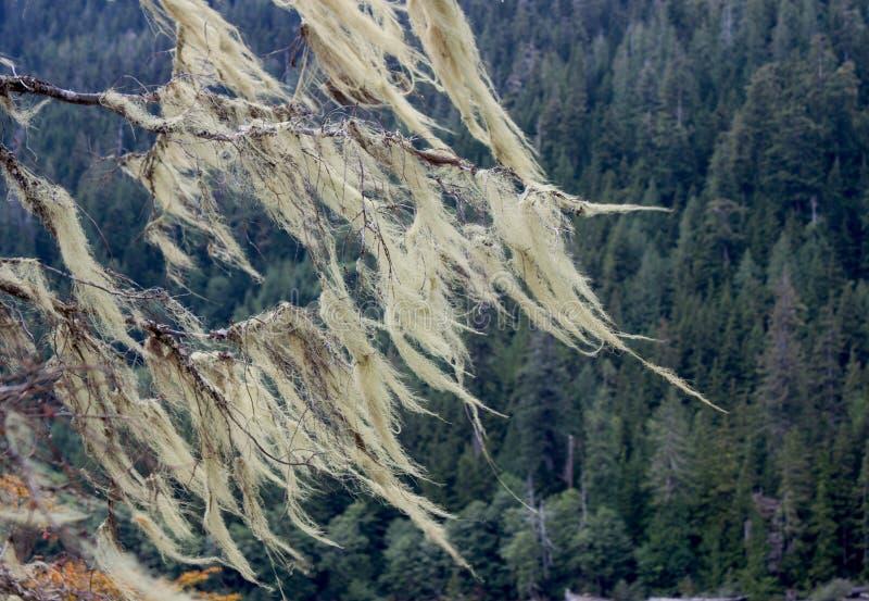Skägg för gamal man` s med Forest Background royaltyfria bilder