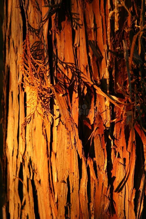 Download Skäll arkivfoto. Bild av barkeeperen, skogar, lampa, trees - 43208