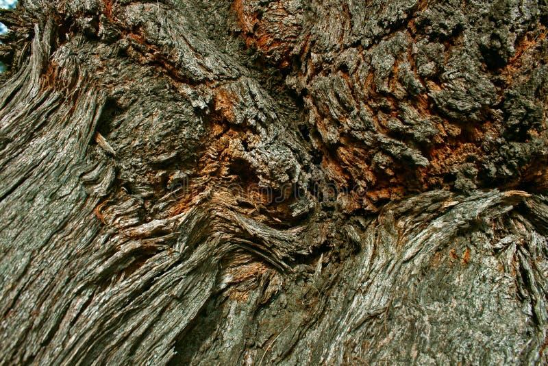 Skäll av den krabba asiatet för trädbuseyttersida att sörja bakgrund arkivfoto