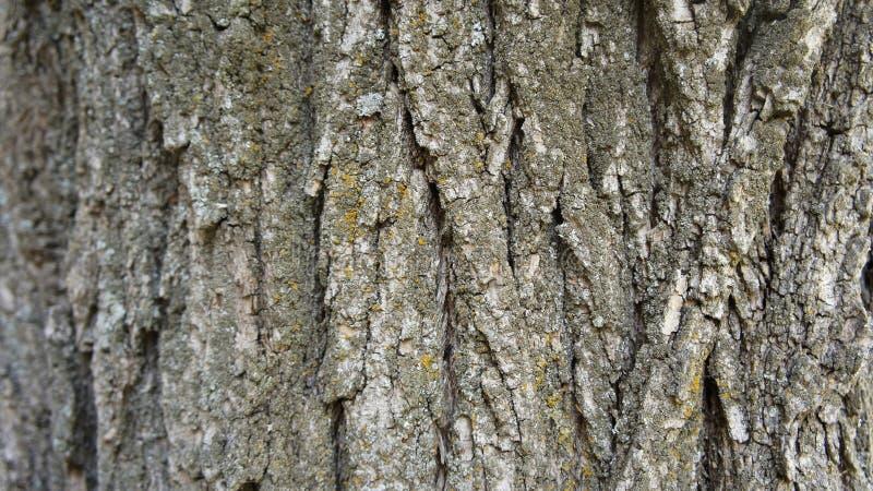 Skäll av en bakgrund för trädgrungetextur arkivfoto