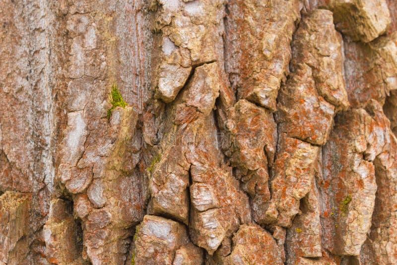 Skäll av en gammal tree royaltyfri fotografi