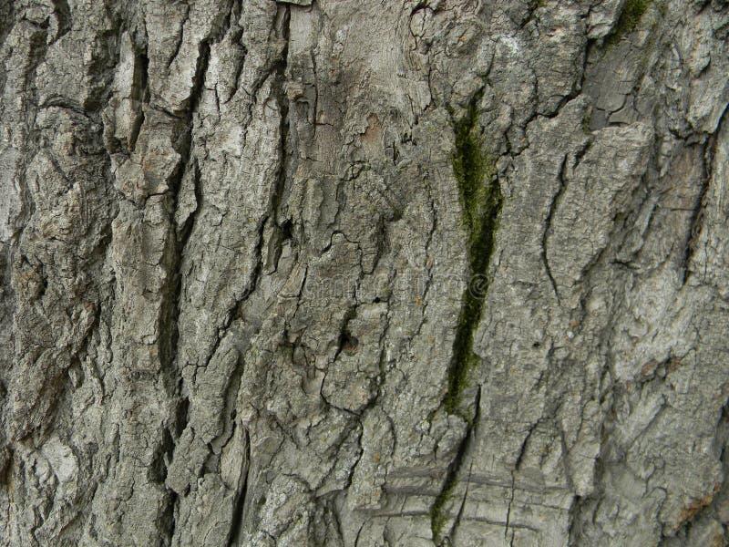 Skäll av ett gammalt träd med en grön mossa royaltyfri fotografi