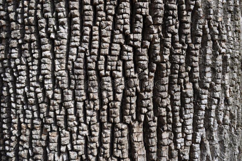 Skäll av gröna Ash Tree arkivfoton