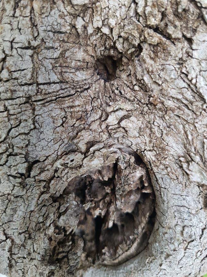Skäll av olivträdet royaltyfria foton
