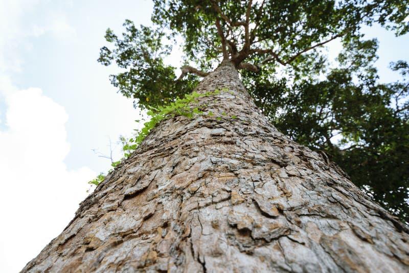 Skäll av trädet och himmel för blick upp till arkivfoton