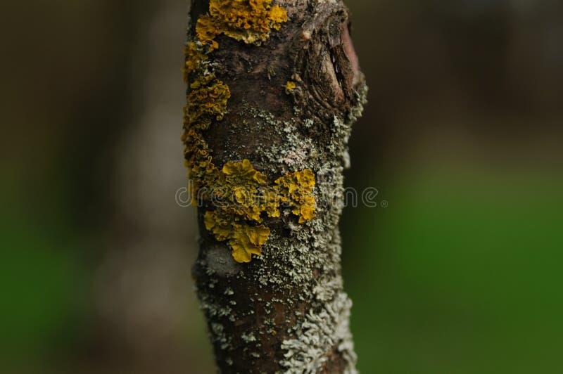 Skäll av treen royaltyfri bild