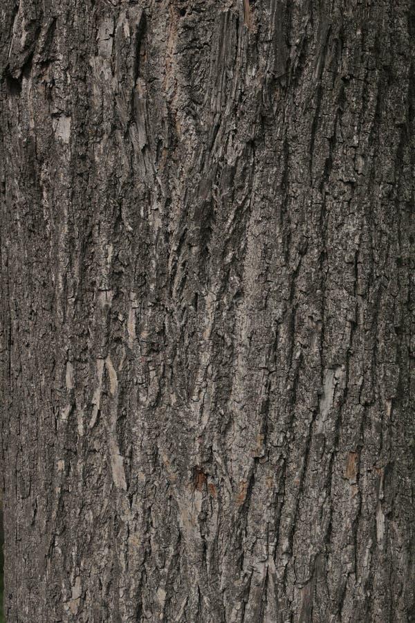 Skäll av treen arkivfoto