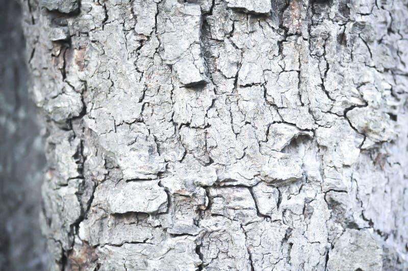 Skäll-, skal-, skal- eller trädskäll i suddighetsbakgrund arkivbilder