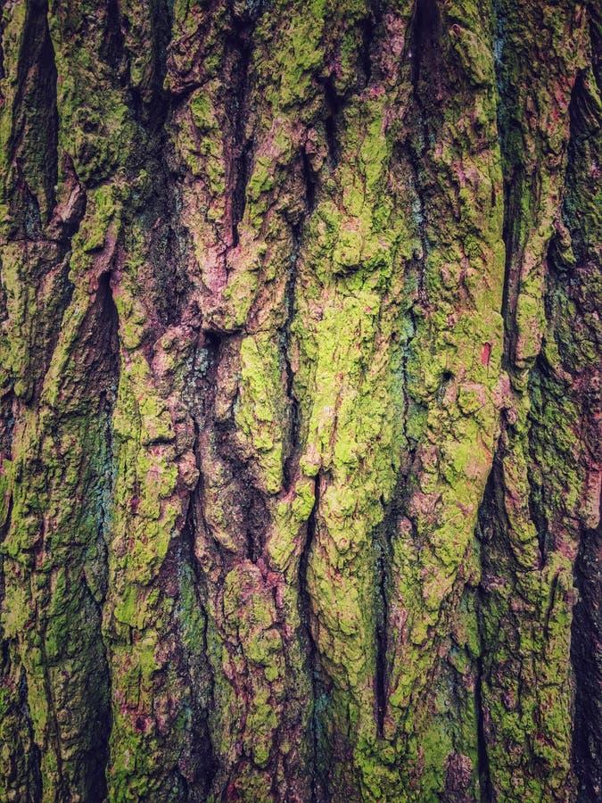 skäll texturerad tree arkivfoton