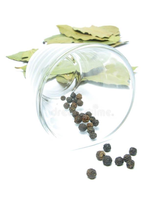 skälla den glass leafen royaltyfria bilder