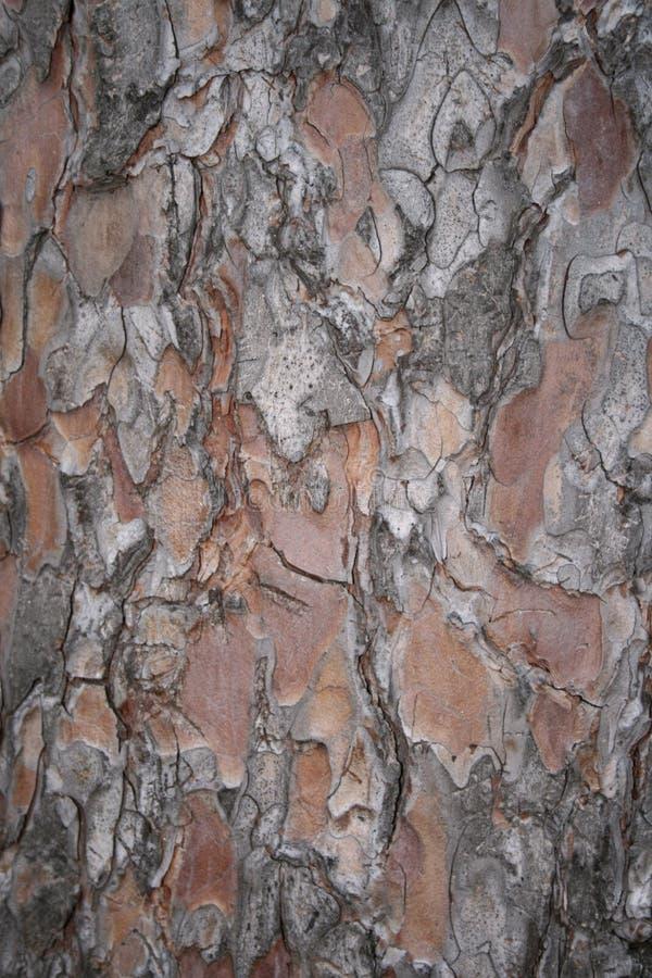 Download Skällclosen spruce upp fotografering för bildbyråer. Bild av skalning - 3547311