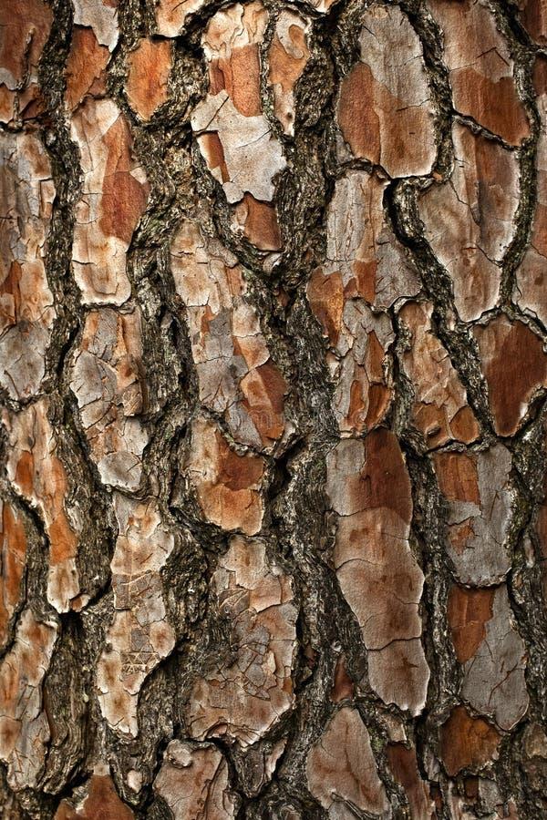 skället sörjer treen arkivbild