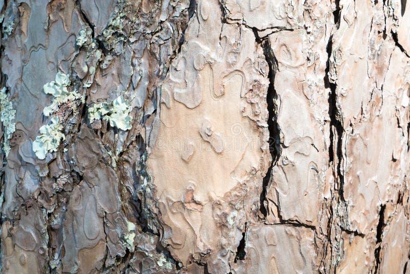skället sörjer treen royaltyfri bild