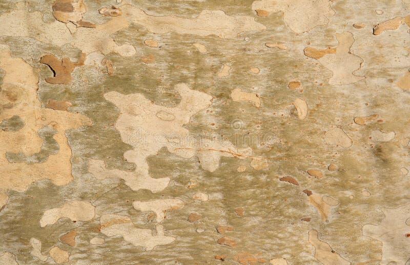 skällsycamoretree arkivbilder