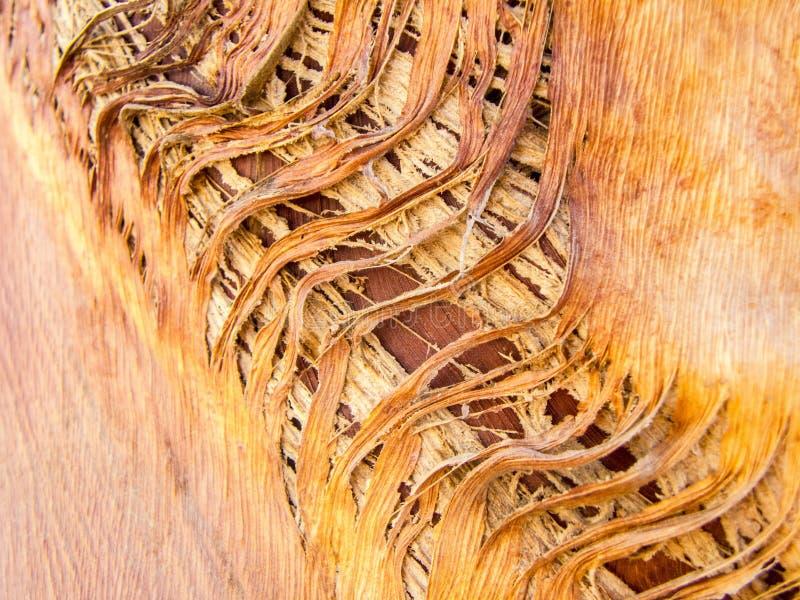 Skälltextur av öknen gömma i handflatan arkivbild