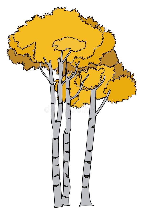 Skälva asp- illustrationvektor Asp- trädvektor vektor illustrationer