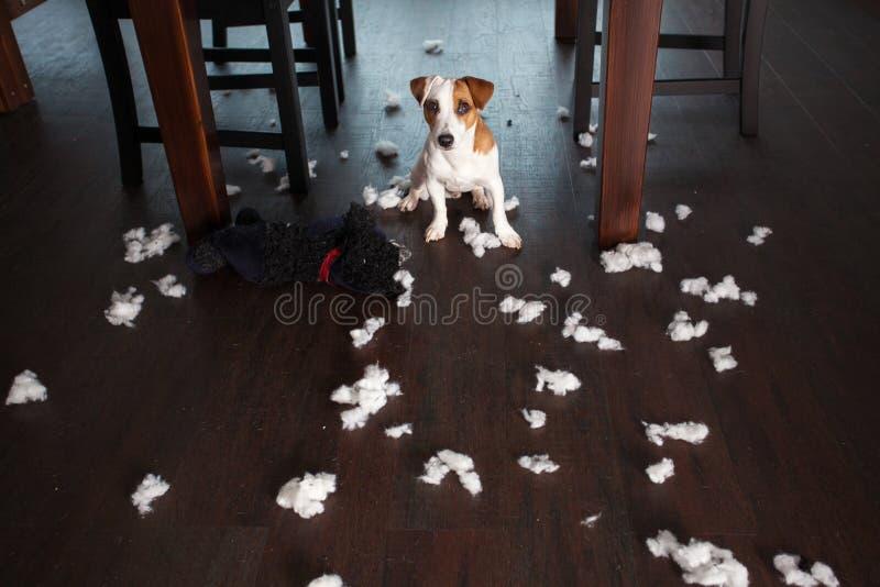 Skämma bort hundkapplöpning arkivbild