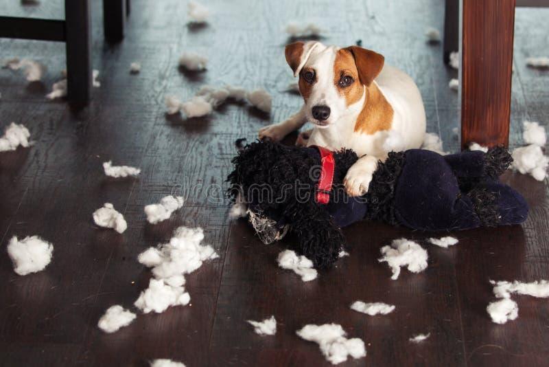 Skämma bort hundkapplöpning royaltyfri foto