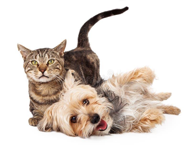 Skämtsam hund och Cat Laying Together royaltyfria bilder