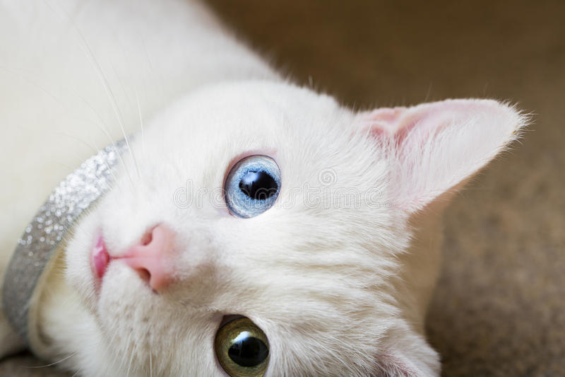 skämtsam katt arkivfoto