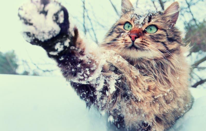 Skämtsam katt som är utomhus- i snöig vinter arkivbild