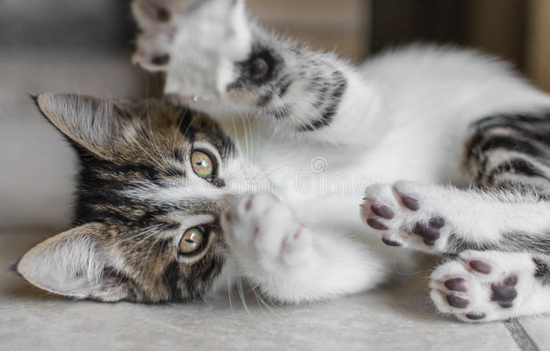 skämtsam kattunge royaltyfri foto