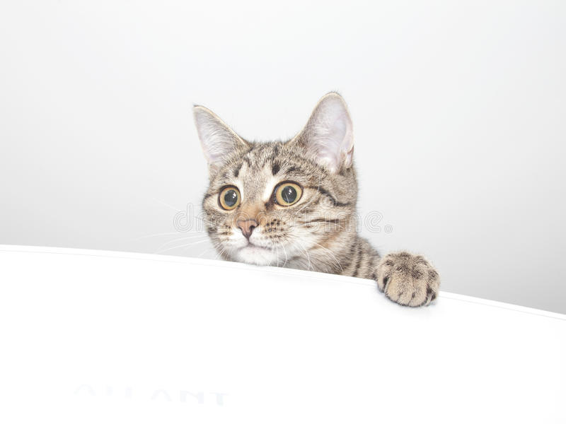 Skämtsam nyfiken kattframsida royaltyfri bild