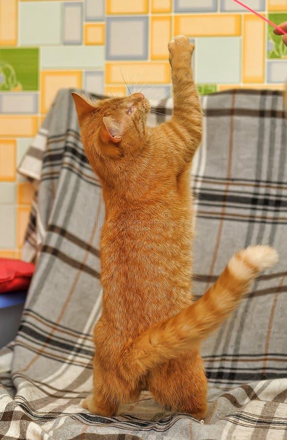 skämtsam red för katt arkivbild