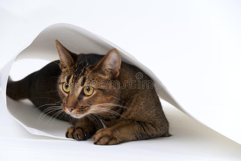 Skämtsam ung katt arkivbild