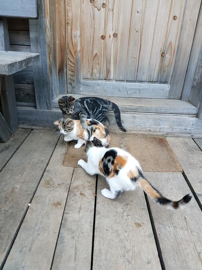 skämtsamma kattungar royaltyfri foto