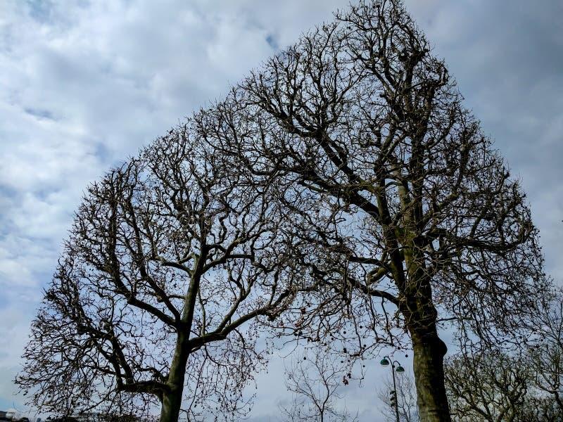 Skära i tärningar geometriska träd i vinter fotografering för bildbyråer