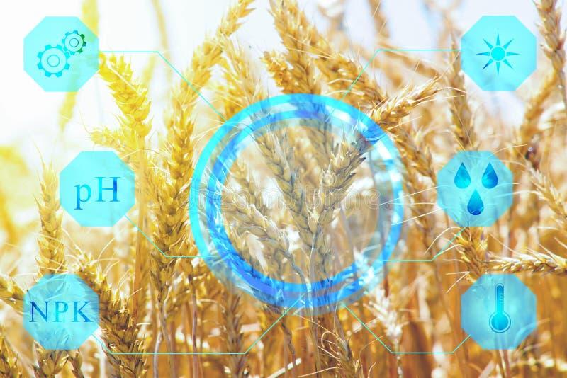 Skärm med data av fuktighet, temperatur, sol- aktivitet, gödningsmedel som bestämmer mogna av korn Begreppet av technoloen royaltyfri foto