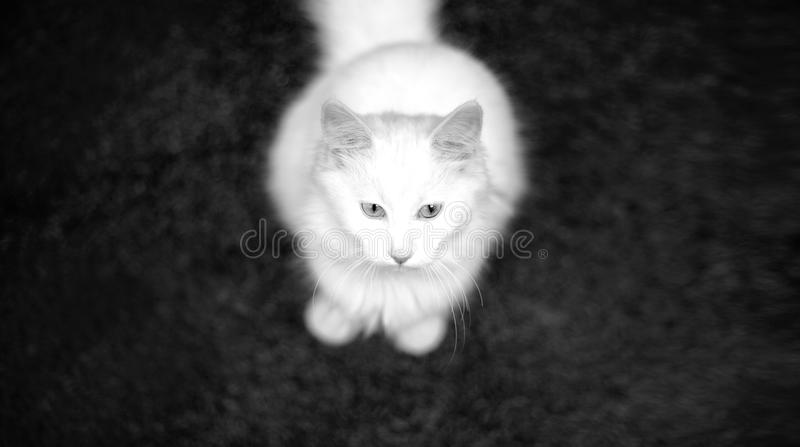 Skåpbil katt royaltyfri bild