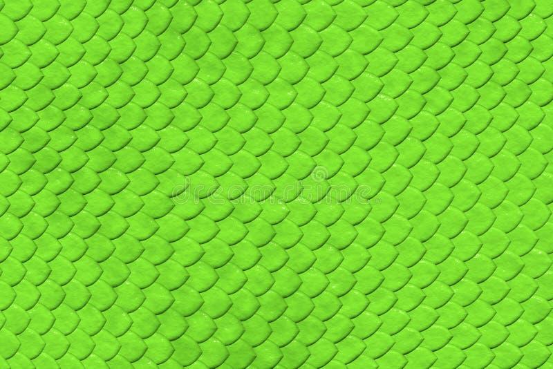 skóra zielony deseniowy wąż fotografia stock