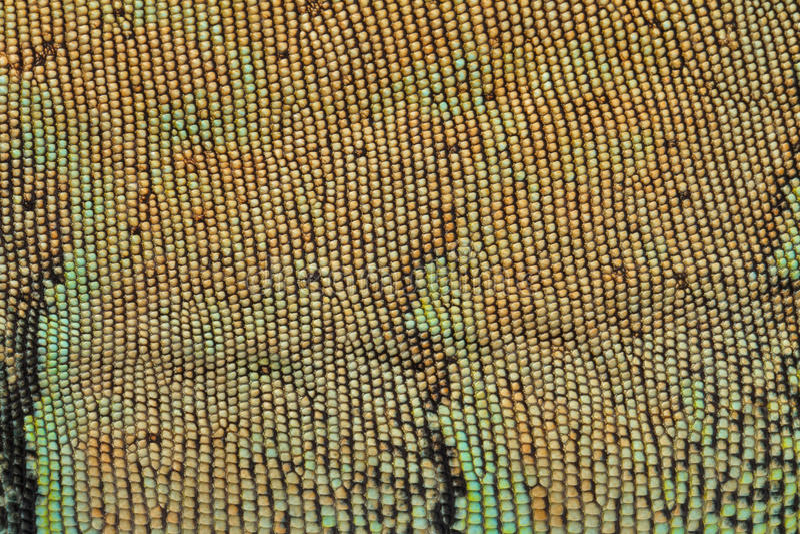 Skóry tekstury wzoru zieleni iguana obraz stock